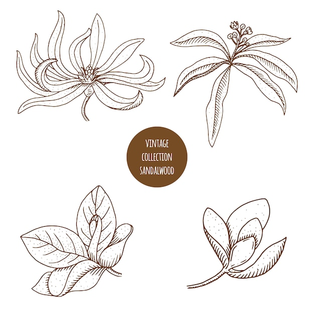 Hand drawn set of cosmetic plants Premium Vector