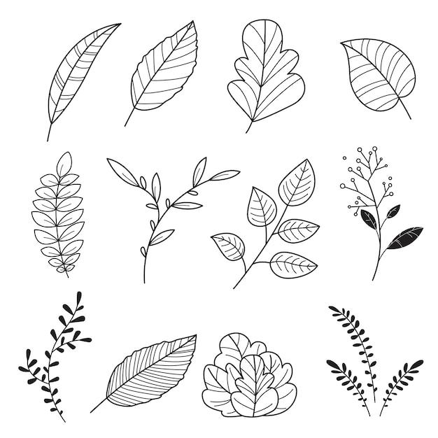 手で書いた。かわいい葉のナチュラルのセット Premiumベクター