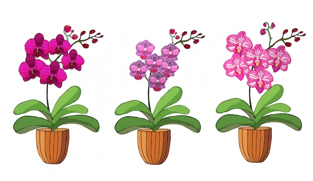 Hand drawn set of orchids in flower pots. Premium Vector