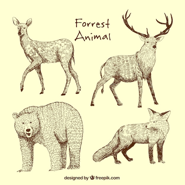 Hand-drawn set of wild animals Free Vector