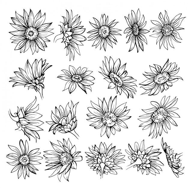 Hand drawn sketch of blooms. Premium Vector