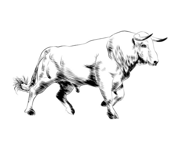 Hand drawn sketch of bull in black Premium Vector