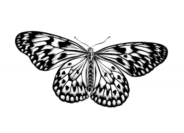 Hand drawn sketch of butterfly in black color. isolated . Premium Vector