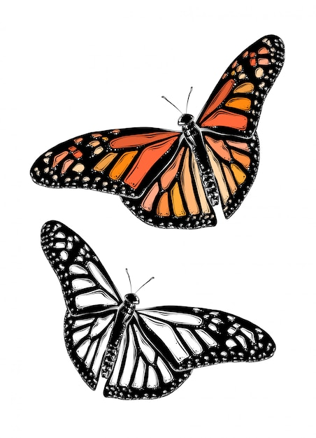Hand drawn sketch of butterfly in color. isolated Premium Vector