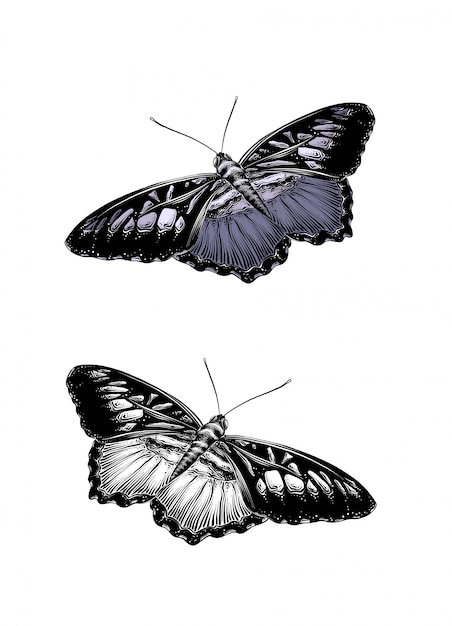 Hand drawn sketch of butterfly in color. Premium Vector