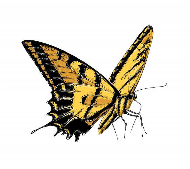 Hand drawn sketch of butterfly in yellow color. isolated Premium Vector