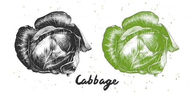 Hand drawn sketch of cabbage Premium Vector