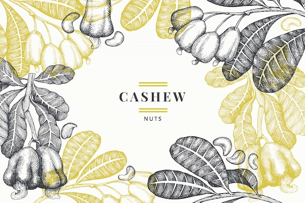 Hand drawn sketch cashew. organic food vector illustration on white. vintage nut illustration. engraved style botanical. Free Vector