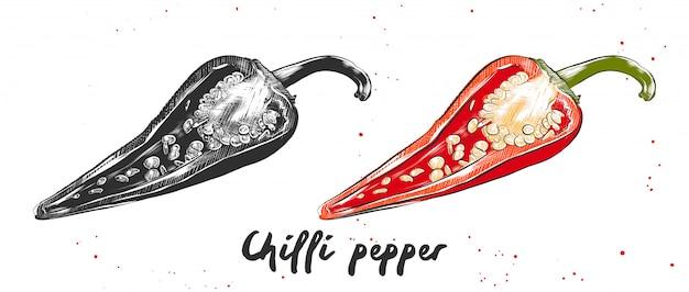 Hand drawn sketch of chilli pepper Premium Vector