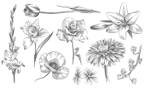 Hand-drawn sketch of flowers and plants set. the set includes roses, chamomile, orchid, chrysanths, tulip, lily, calla, papaver, chinese rose, lily-of-the-valley Premium Vector