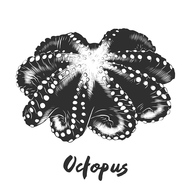 Hand drawn sketch of octopus in monochrome Premium Vector
