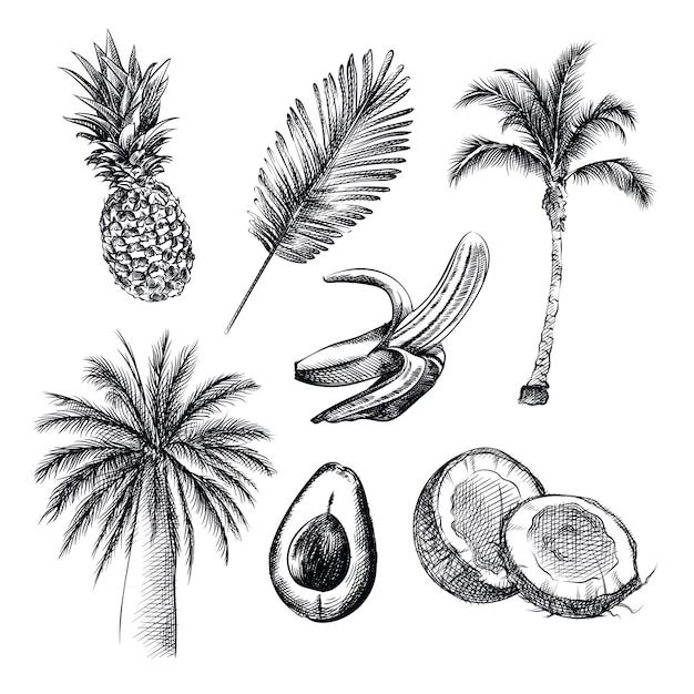 熱帯のテーマの手描きのスケッチ。セットには、パイナップル、ヤシの木、ココナッツ、アボカド、バナナ、ココナッツの木が含まれています Premiumベクター