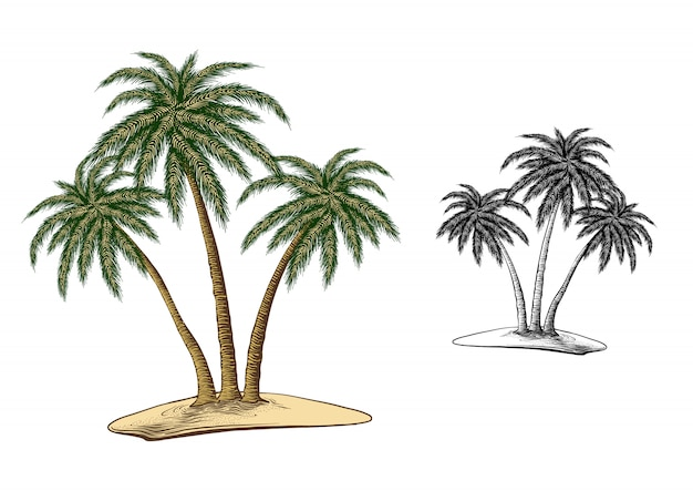 Hand drawn sketch of palm trees in color, isolated on white Premium Vector