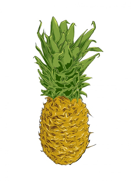 Hand drawn sketch of pineapple in color. isolated . Premium Vector