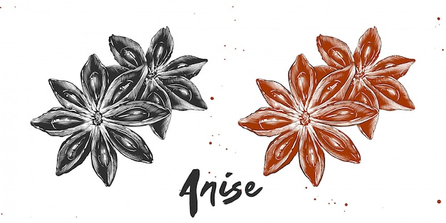 Hand drawn sketch of stars anise Premium Vector