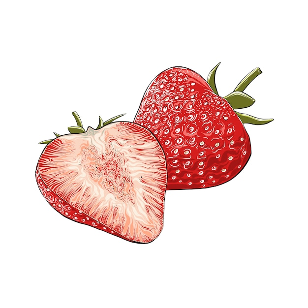 Hand drawn sketch of strawberry in color, isolated. detailed vintage style drawing Premium Vector