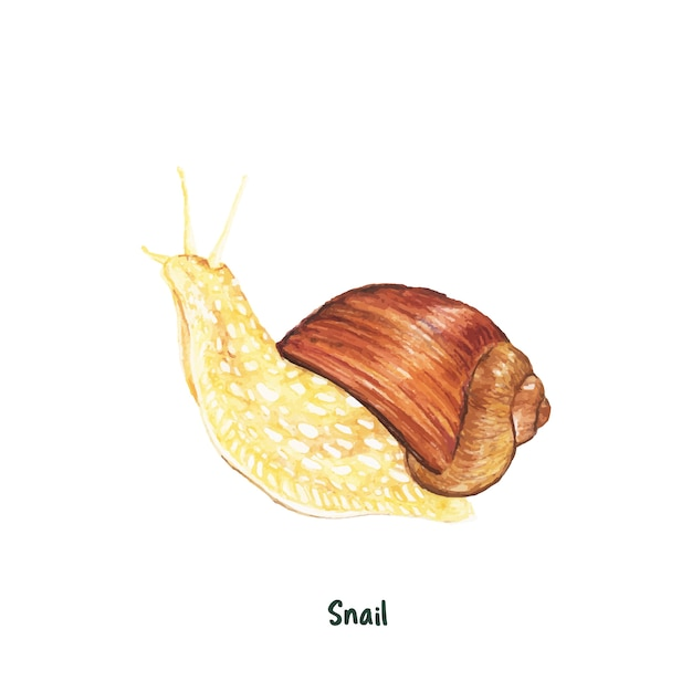 Hand drawn snail isolated on white background Free Vector