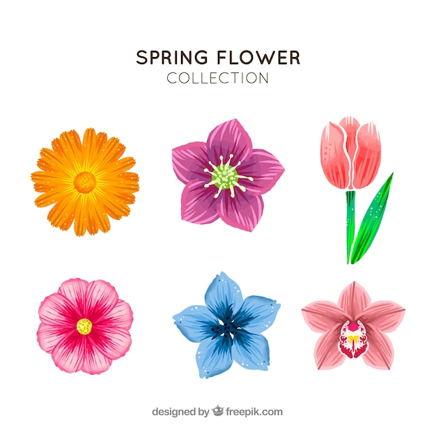 Hand drawn spring flower collection vector free download hand drawn spring flower collection free vector mightylinksfo