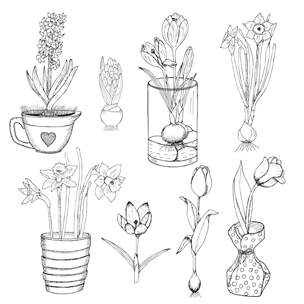 Hand drawn spring flowers set Free Vector