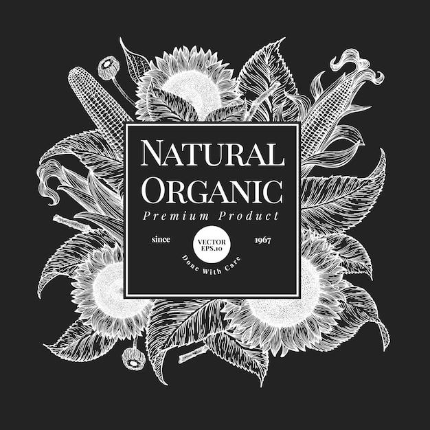 手描きひまわりデザインテンプレートです。チョークボードのベクトルファーム植物イラスト。ヴィンテージの自然な背景 Premiumベクター