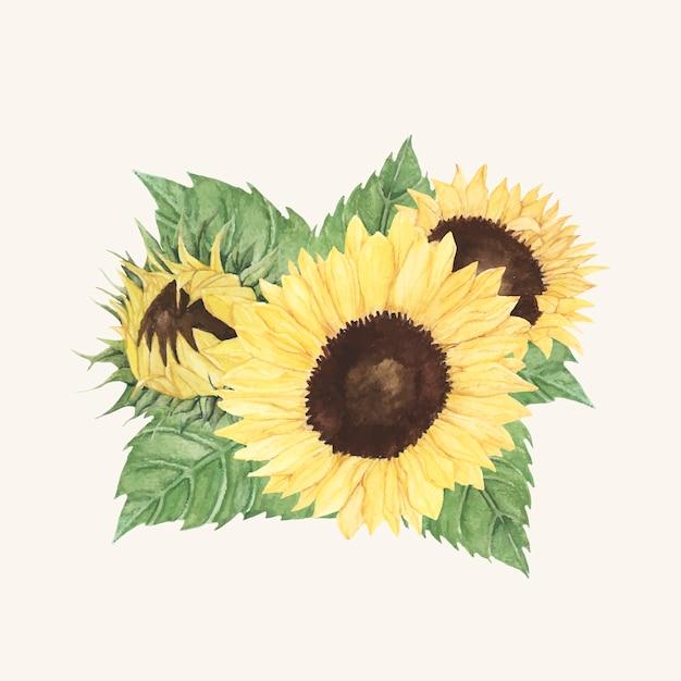 Hand drawn sunflower isolated on beige\ background