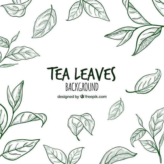 free vector hand drawn tea leaves background hand drawn tea leaves background