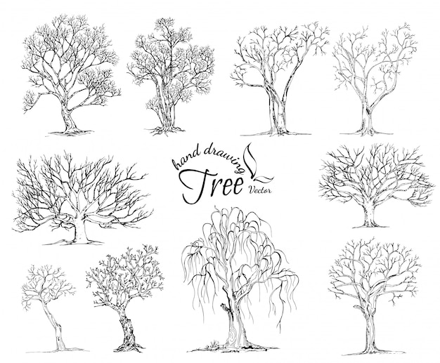 Hand drawn tree isolated on white background Premium Vector