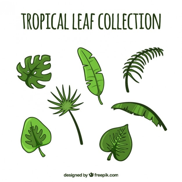 Hand drawn tropical green leaves set