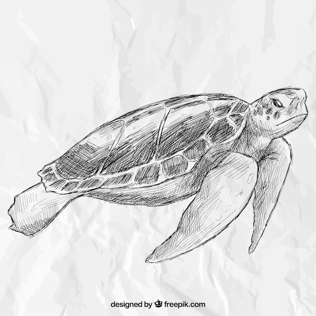 Hand drawn turtle Free Vector