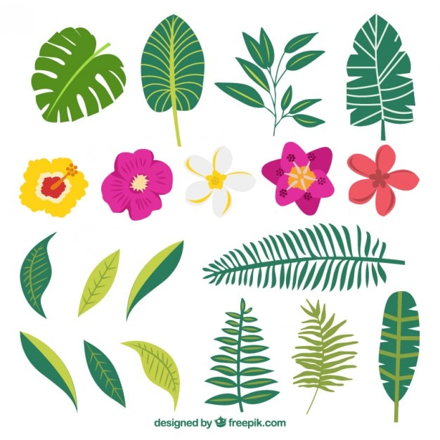 Hand drawn variety of plants and exotic\ flowers
