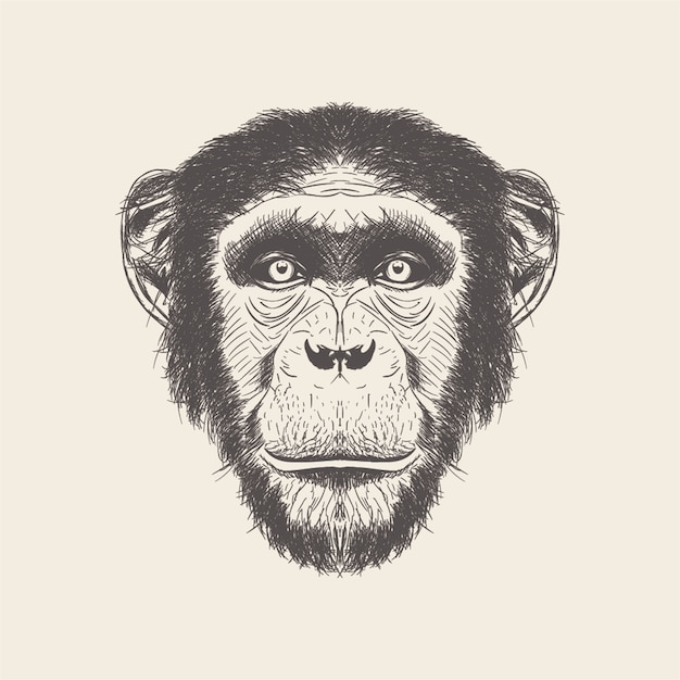Hand drawn vector of monkey head illustration. Premium Vector