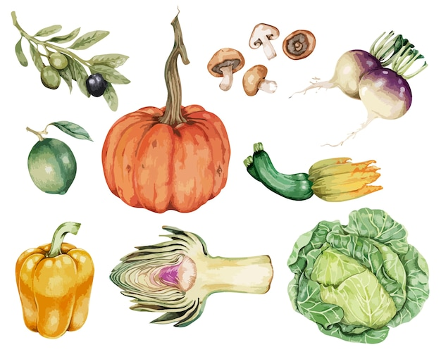 Hand drawn vegetable collection vector Free Vector