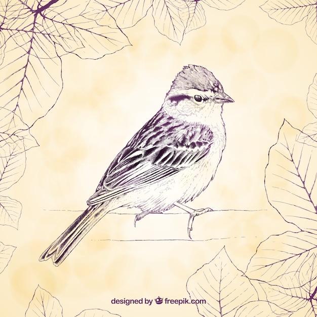Vintage bird vector free download - photo#1