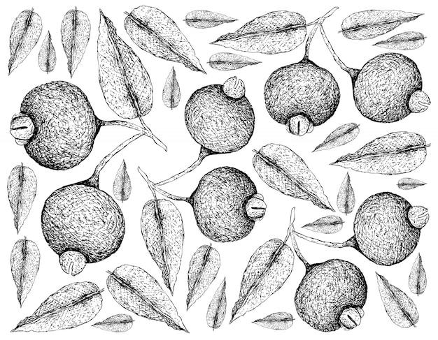 Hand drawn wallpaper of guabiju fruits on white background Premium Vector