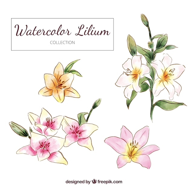 Hand drawn watercolor lilium flowers Free Vector
