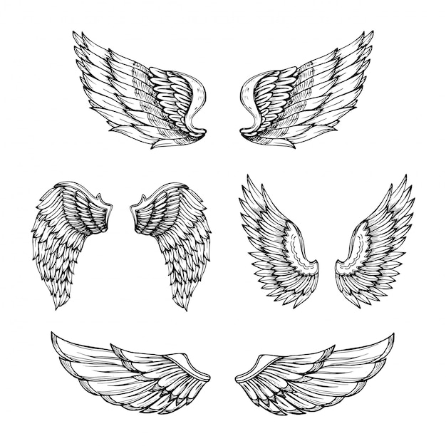 Ручной обращается крыло. эскиз крылья ангела с перьями. Premium векторы