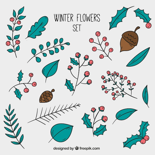 Hand-drawn winter flowers collection