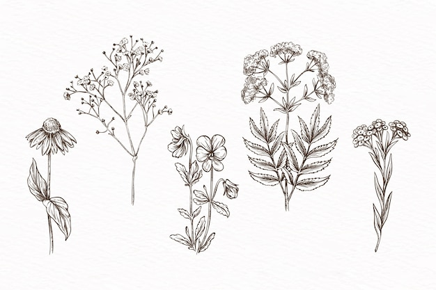 Hand-drawn with herbs & wild flowers Free Vector
