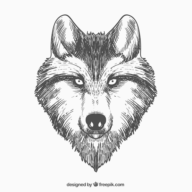 hand drawn wolf face