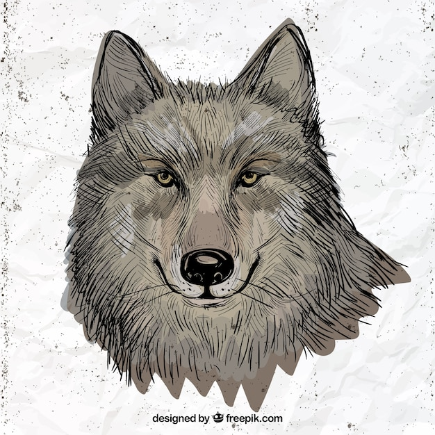 hand drawn wolf illustration free vector