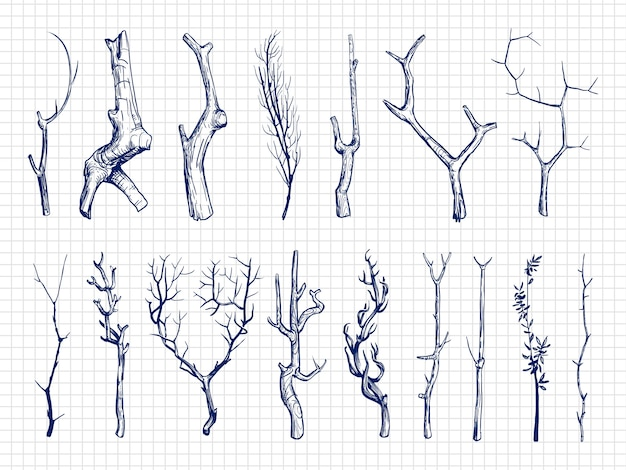 Hand drawn wood branches collection Premium Vector
