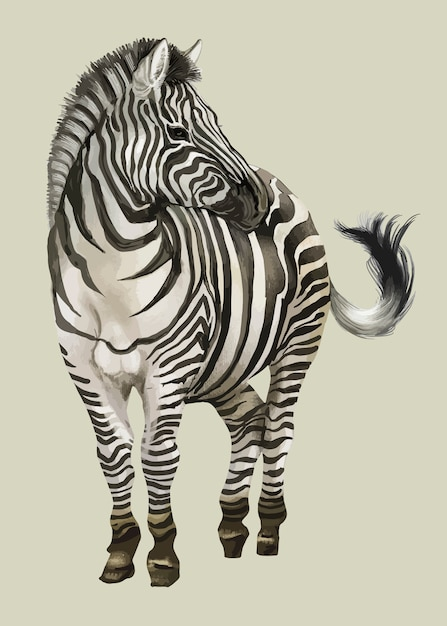 Hand drawn zebra Free Vector