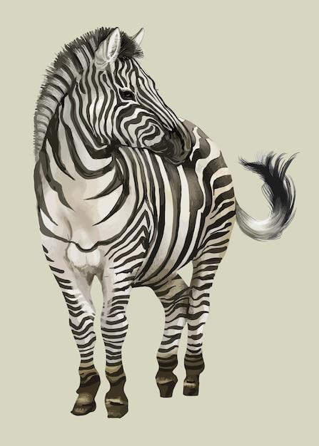 Hand drawn zebra Free Vector