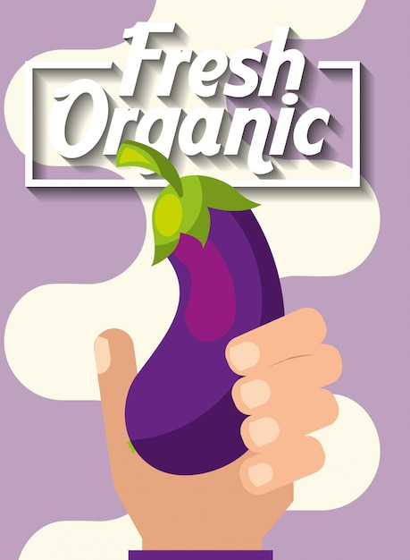 Hand holding vegetable fresh organic eggplant Premium Vector
