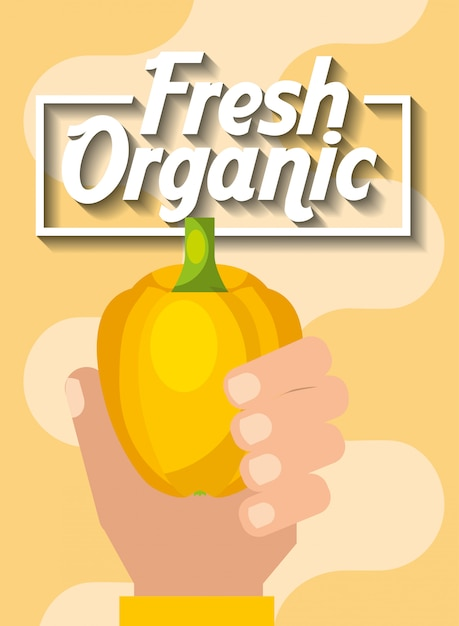 Hand holding vegetable fresh organic yellow pepper Premium Vector
