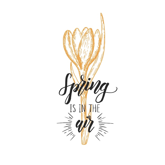 Hand made lettering - spring in the air. vintage hand drawn crocus. sketch. spring flowers. Premium Vector