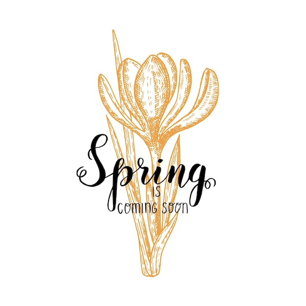 Hand made lettering - spring is coming soon. vintage hand drawn crocus. sketch. spring flowers. Premium Vector