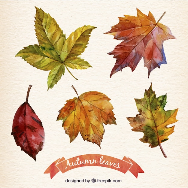 Hand painted autumn leaves collection Free Vector