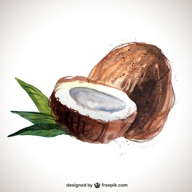hand painted coconut Premium Vector