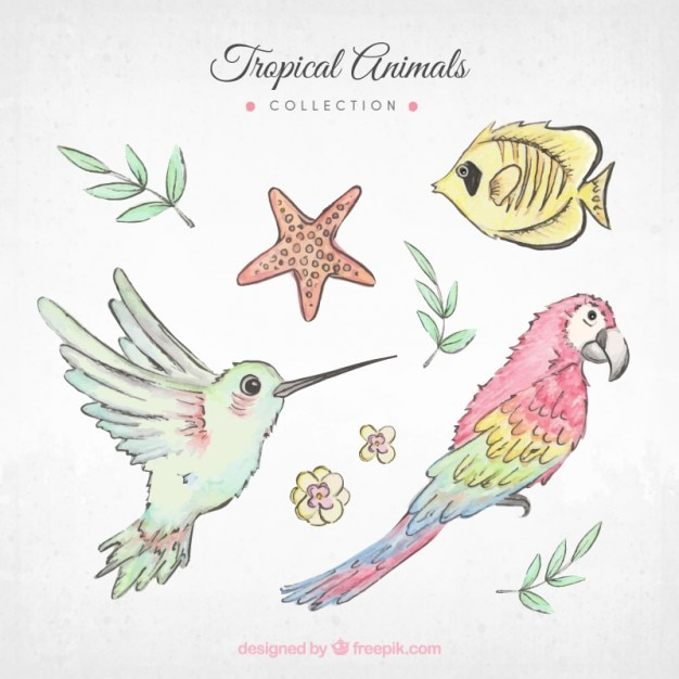 Hand painted exotic birds and other\ animals